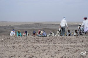 Excavating in the Afar region of Ethiopia
