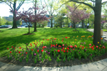 CWRU quad in spring