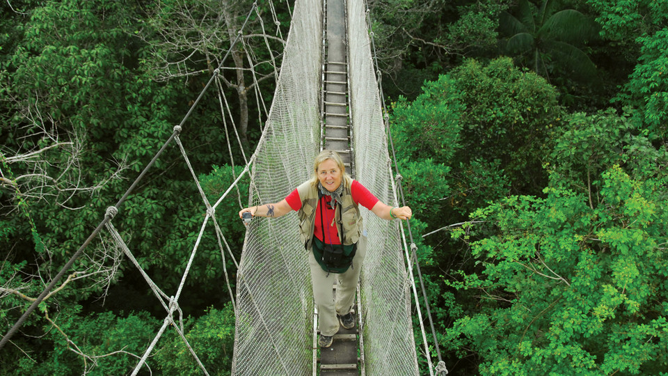 Margaret Lowman on bridge over forest canopies  sc 1 st  The Daily | Case Western Reserve University & Hear from u201cReal Life Loraxu201d on her research into forest canopies ...