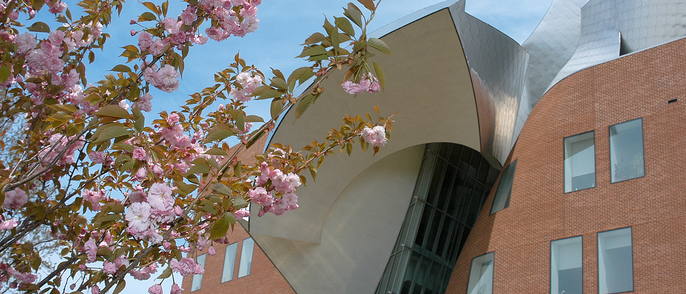 Photo of Peter B. Lewis Building exterior with flowers on bush in the foreground