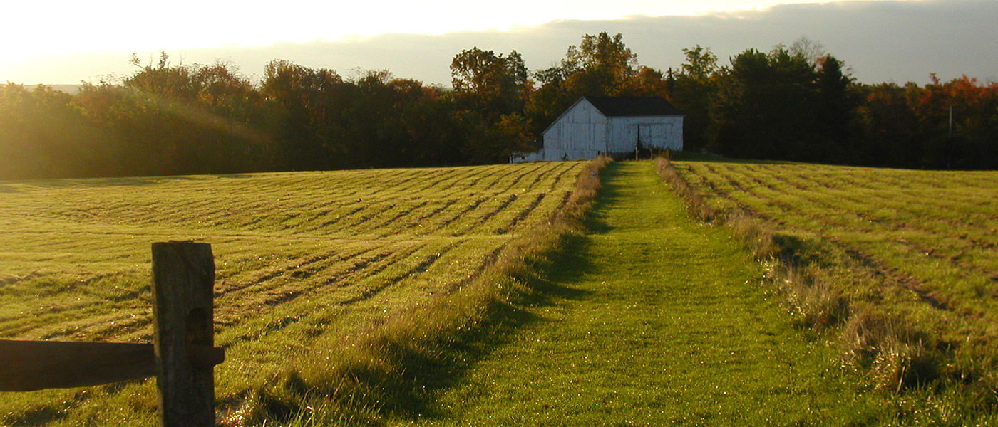 Photo of University Farm with white barn in the background and grassy field and fence in the foreground