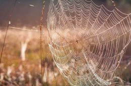 Photo of a spiderweb