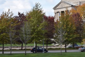Line of trees in fall across the street from Severance Hall