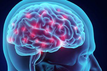3D illustration of brain nervous system