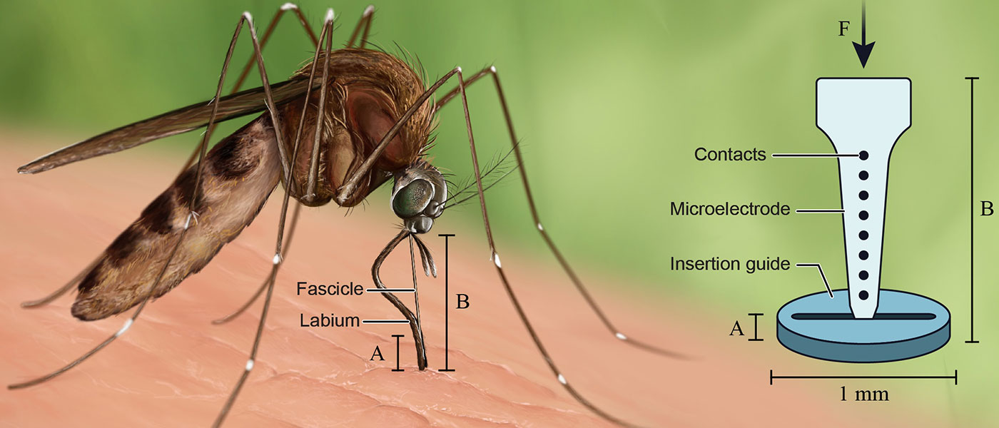 Illustration comparing how a mosquito bites with new plastic neural implant guide.