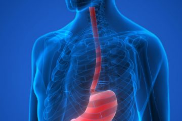 Image showing skeletal view of esophagus leading to the stomach.
