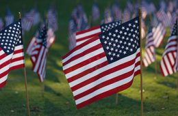 american flags in celebration of memorial day