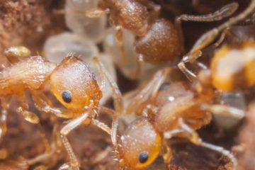 closeup photo of ants