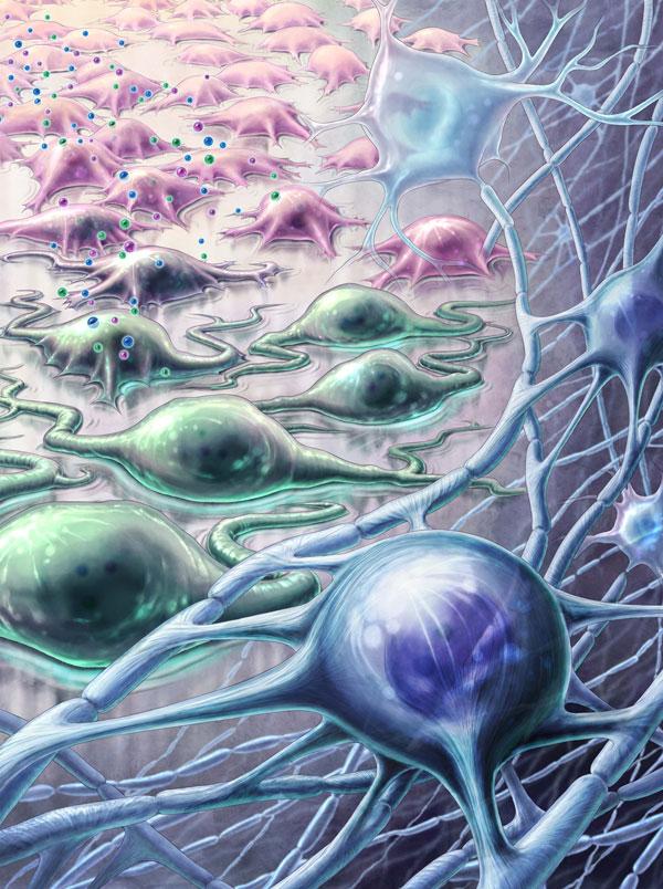 illustration of stem cell