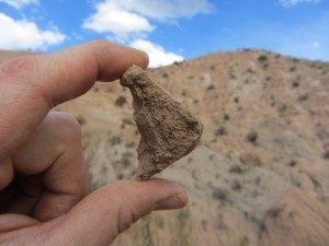 This piece of tortoise shell and other fossils found near Quebrada Honda suggest the high plain was less than a kilometer above sea level 13 million years ago.