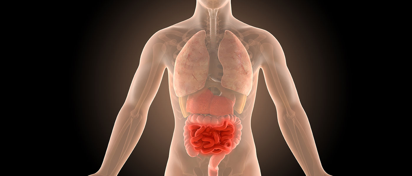 A 3d illustration of the human body showing the intestines