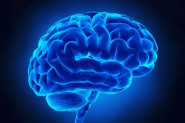 illustration of a blue model of brain