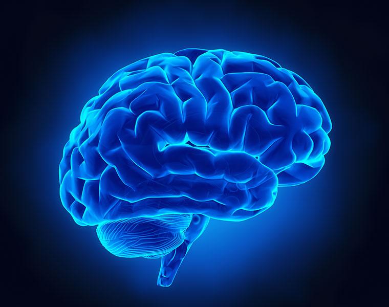 illustration of a blue model of brain