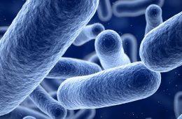 Illustration of bacteria on blue background