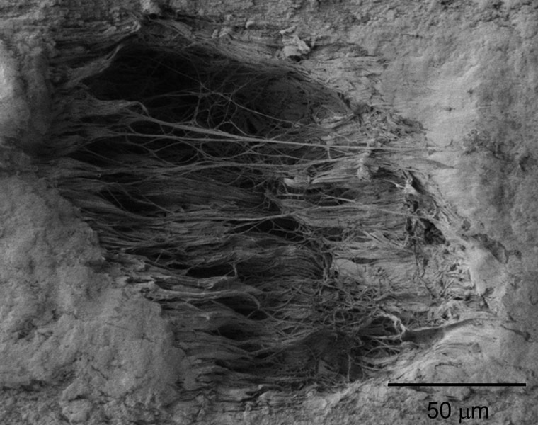 Photo taken with a scanning electron microscope of a void and fibrils created in the surface of a polymer sheet when the sheet is stretched.