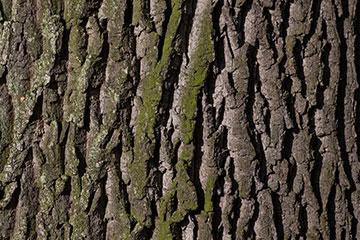 Close up photo on tree bark