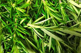 Close up photo of herbs