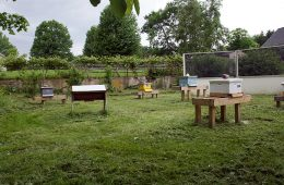Several honeybee hives in the A.I. Root Farm Apiary