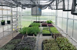 Plants growing in one of the rooms of the greenhouse