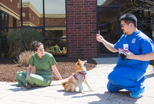 Two veterinarians play with a dog outside a building