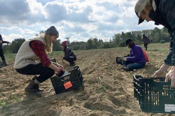 CWRU students work on collecting crops