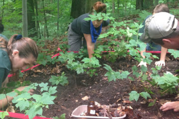 scientists on their hands and knees in a forest, looking for worms