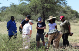 student researchers in namibia looking at marama bean plant