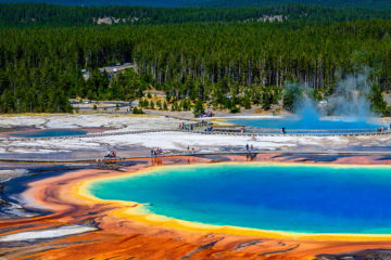 Photo of the Grand Prismatic Spring in Yellowstone National Park with evergreens in the background