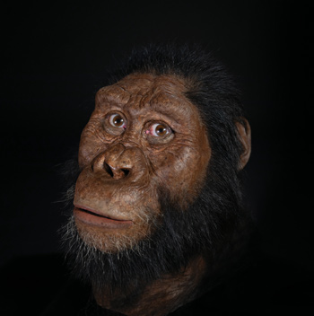 Facial reconstruction of early human ancestor