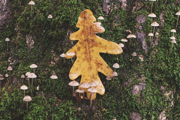 Photo of a leaf, mushrooms and moss along a tree's base
