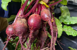 Photo of fresh beets