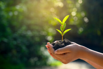 Photo of hands holding a growing plant